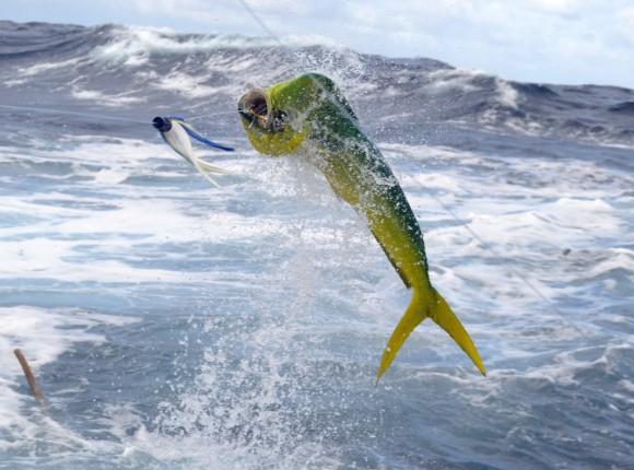 Pêche à la petite traîne le dimanche 30 avril 2017